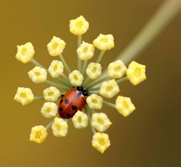 Claire Carey ladybird