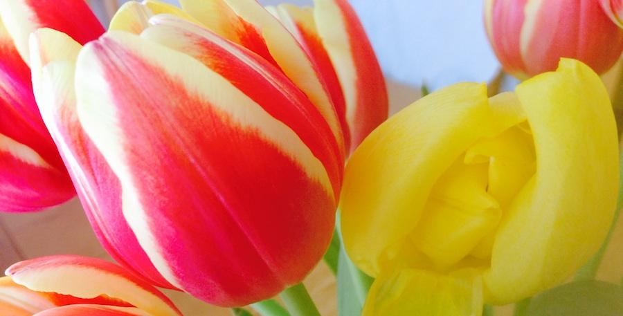 Tulips_edited