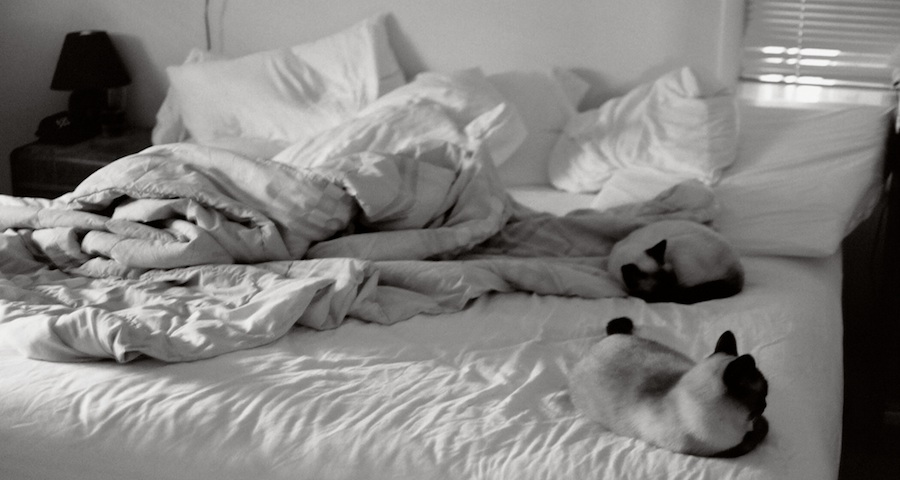 bed with cats_edited