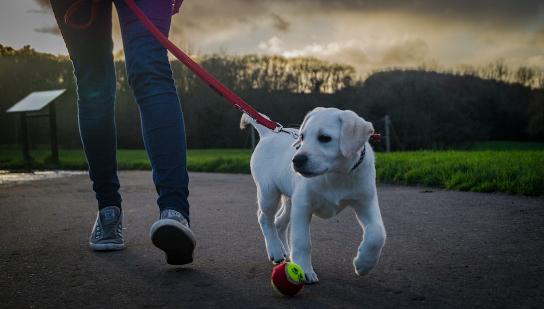 Walkingthedog_Flickr_PhilDolby_edited_size